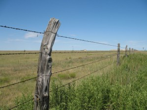 Barbed-Wire-Fence-Ideas